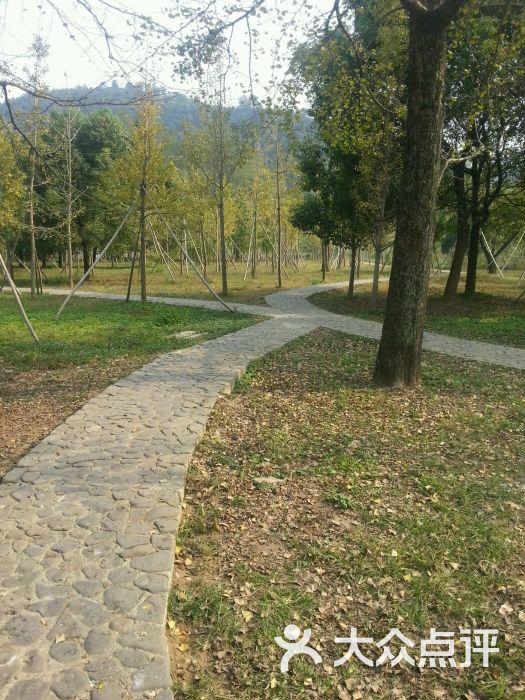十里古银杏长廊景区介绍