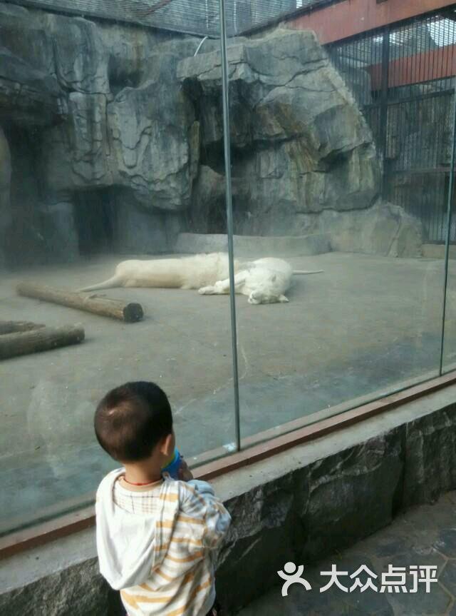 南昌新动物园的全部评价-南昌-大众点评网