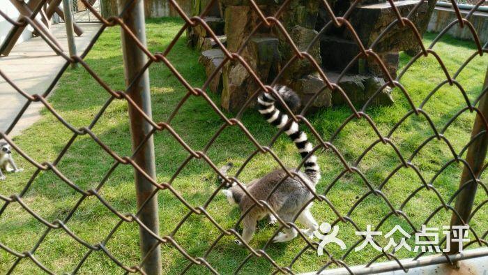 苏州动物园-图片-苏州景点-大众点评网