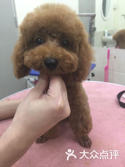 狗儿的尾巴-图片-深圳宠物-大众点评网