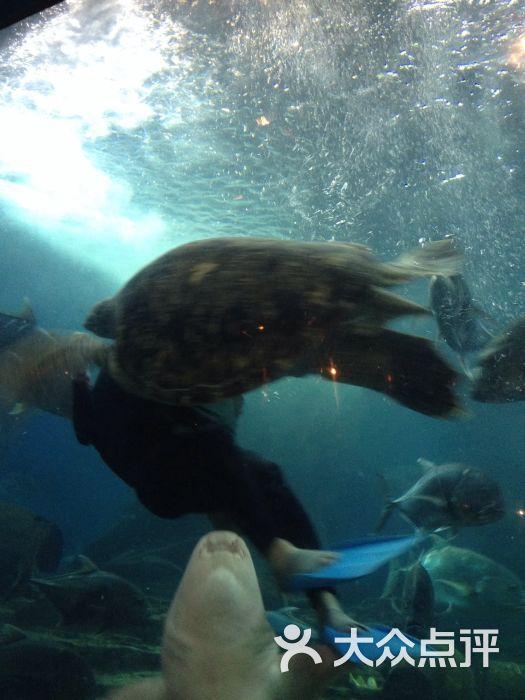 东湖海洋世界公园图片 - 第4张